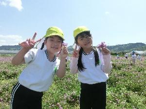 れんげ畑の写真2