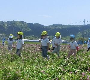 れんげ畑の写真3